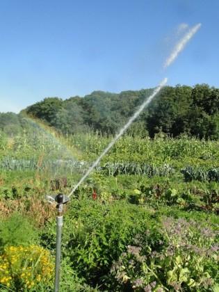 automatische Garten-Bewässerung im Sommer