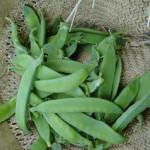 Die vielfältige Ernte der Zuckererbsen