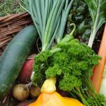 Nachlese Ernte und Lagerung