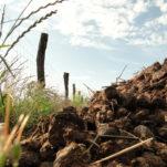Ackerkurs Pankow – Düngung und Nährstoffversorgung