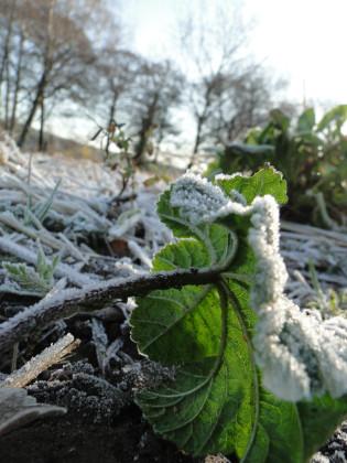 Wintereindruck Havelmathen 11.1 Malvenbatt