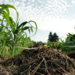 Ackerkurs Mette – Düngung und Nährstoffversorgung