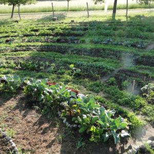Gartenkreise Pankow