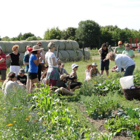 Bio-Gartenbau-Workshop im Bauerngarten Berlin Süd