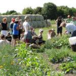 Jetzt teilnehmen: Urban gardening Konferenz