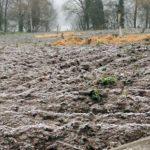 bauerngarten berlin im winter