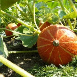 Erntezeitpunkt und Erntefenster