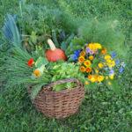 tip Berlin: Gärtnern ohne Grenzen