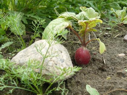 Gartentelegramm No 282017 Bauerngarten