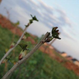 Ackerbegehung – erste Gartenführung (Pankow)