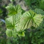 Ackerbegehung – erste Gartenführung (Mette)