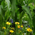 Nicht nur fürs Auge: Die Blumen blühen