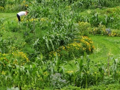 Pankow Juli Gartenrund Mais Blumen
