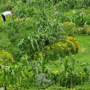 Üppig-grüne Gartenkreise im Hochsommer