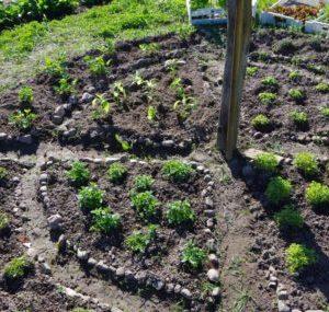 Erste Kräuterernte und weitere Salatfreuden