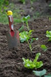 Nächste Jungpflanzenlieferung mit neuem Kohl