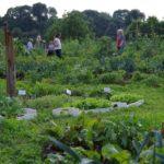 erntezeit im bauerngarten mit jungpflanzen