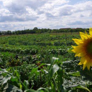 biogarten kreise weiter himmel über brandenburg