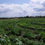 biogarten kreise berlin weite im süden