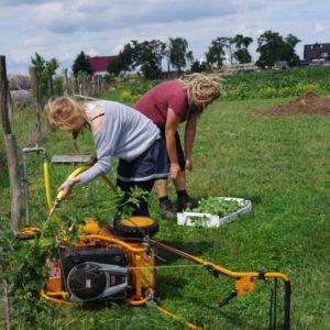 Gartenarbeitstage: Lärm in der Idylle