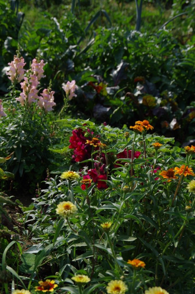 Gemeinsame bauerngarten Pankow August Blumen (8) » bauerngarten #PE_45