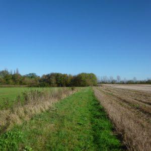Die Felder der Elisabeth-Aue retten