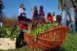Gartentelegramm Sonderausgabe: Saisonbeitrag nach Selbsteinschätzung
