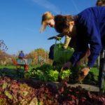 Buchungsbeginn Gartensaison 2018