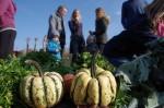 bauerngarten Gemüse - regionaler geht es nicht!