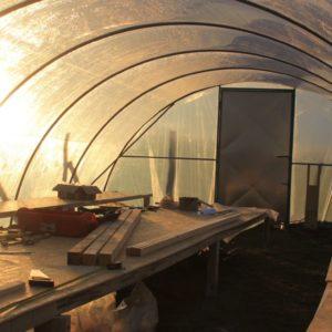 bauerngarten jungpflanzen im tunnel
