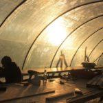 Jungpflanzen im Tunnel