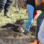 obstgehölze einpflanzen bauerngarten berlin