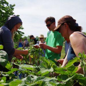 Ackerkurs Mette – Parzellenpflege und Gartensprechstunde