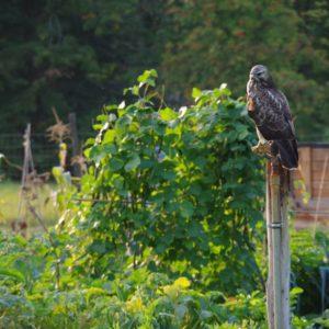 Vogelbeobachtung im bauerngarten