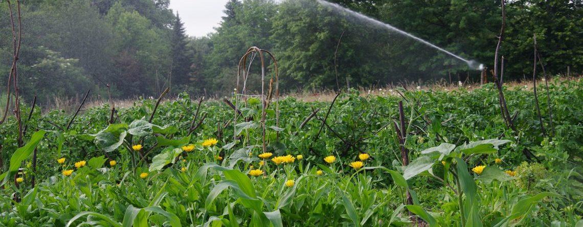Bauerngarten Ackern Wo Wir Leben