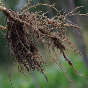 Ackerkurs Mette – Grundbegriffe der Ökologischen Landwirtschaft