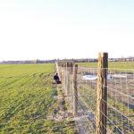 Zaunbau in Ahrensfelde
