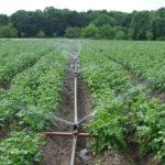Feldfrüchte vorbestellen