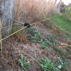 Gartentelegramm für Havelgärtner – hungrige Wildschweine